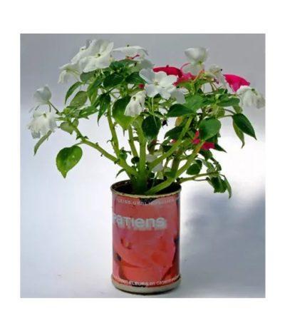 Mikrogarten - Blumen in der Dose